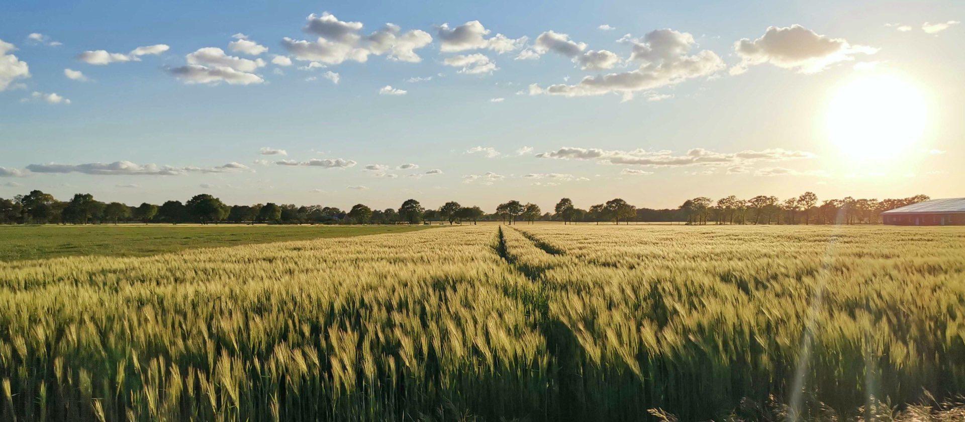Schöne Landschaft mit Feldern und Waldrand, Heimat von Inpsyde CEO Alex Frison
